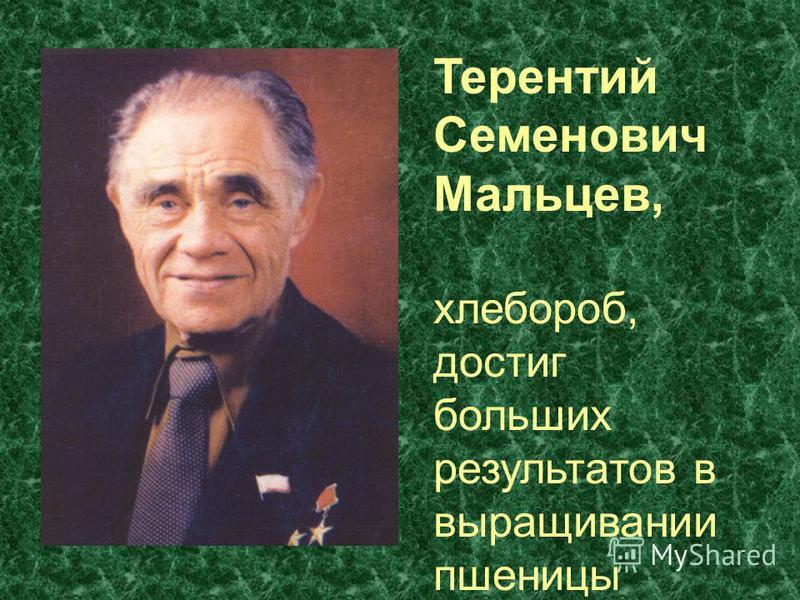 Терентий Семенович Мальцев, хлебороб, достиг больших результатов в выращивании пшеницы