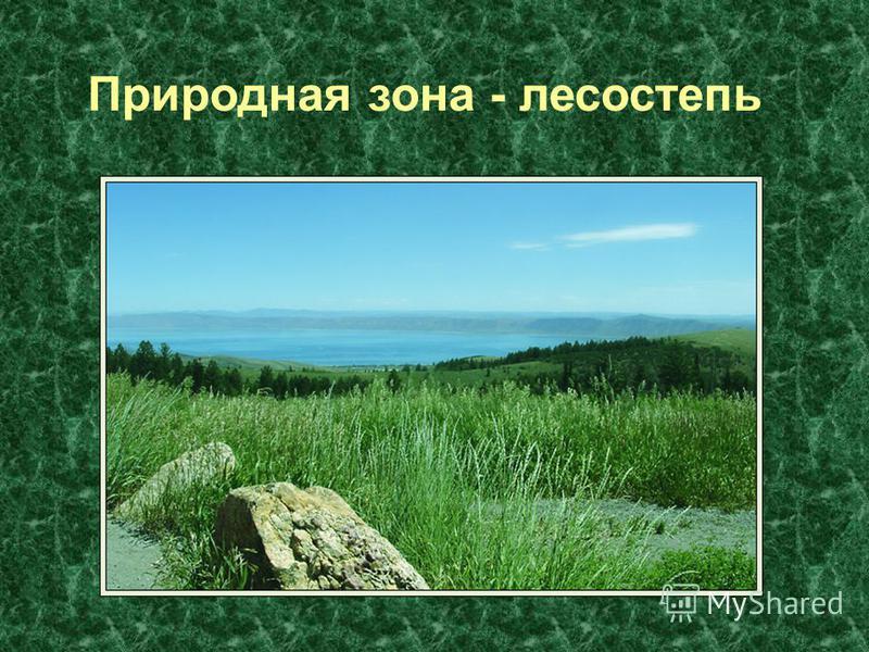 Природная зона - лесостепь