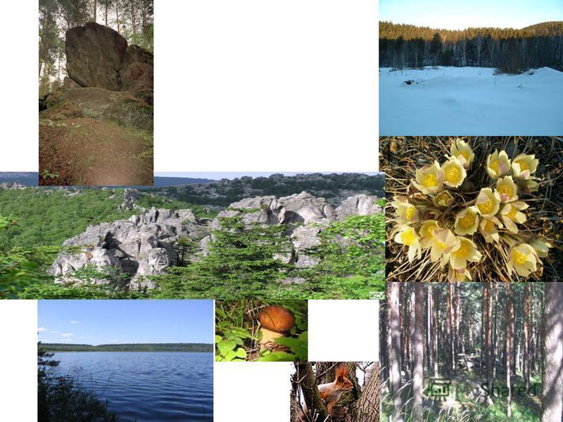 В состав парка входят земли лесного фонда Федерального государственного учреждения