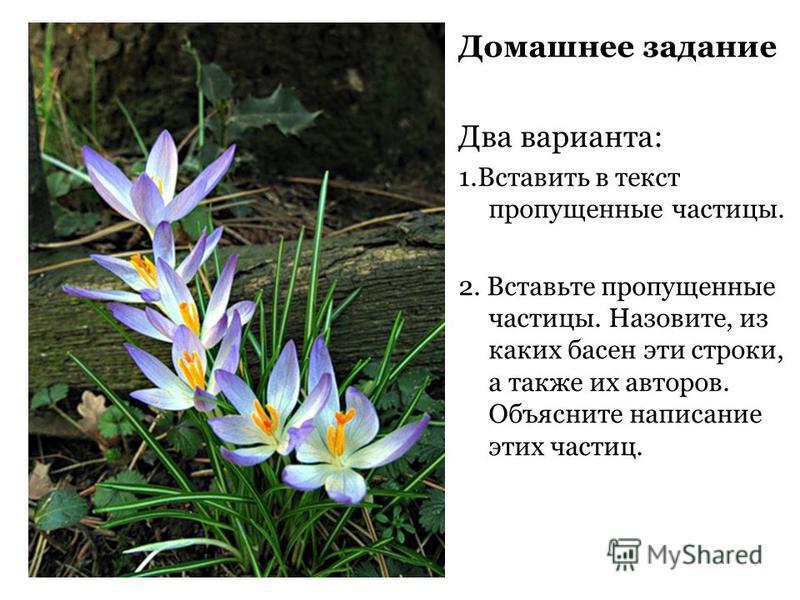 И всё (таки) это весна _____________грустна _______________ясно ________________ прекрасно!