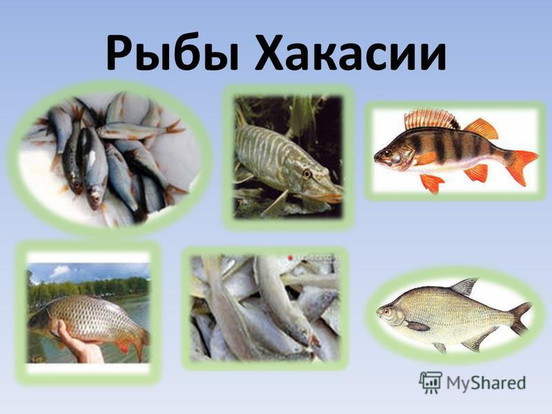 ИХТИОЛОГ это ученый биолог, занимающийся изучением рыб, их поведения, размножения как в естественных условиях, так и при разведении.