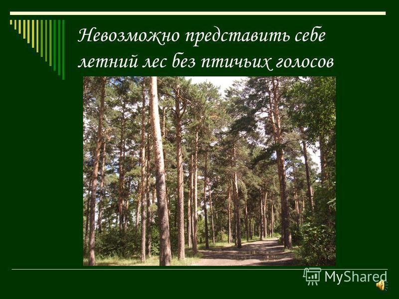 Невозможно представить себе летний лес без птичьих голосов