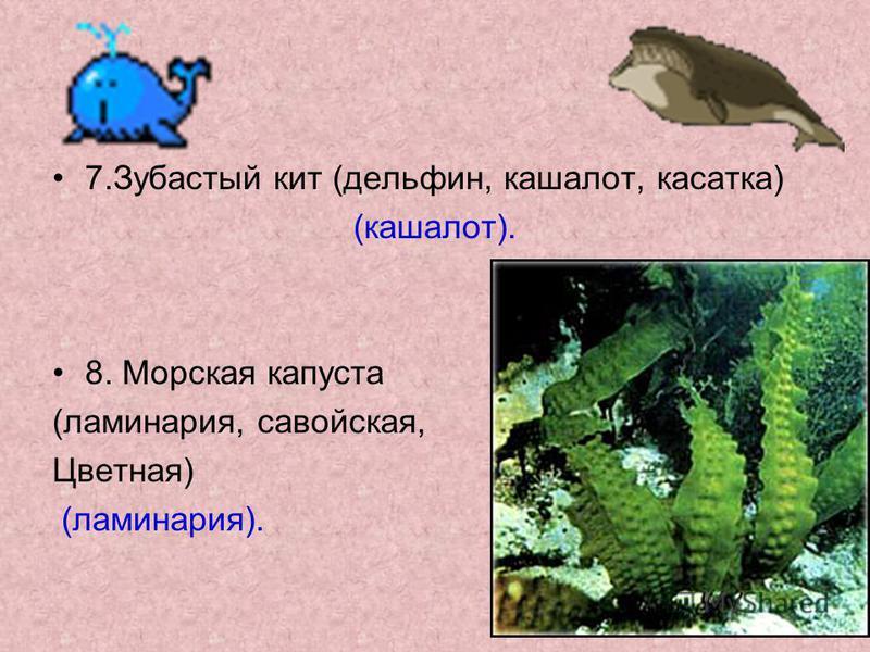 7. Зубастый кит (дельфин, кашалот, касатка) (кашалот). 8. Морская капуста (ламинария, савойская, Цветная) (ламинария).
