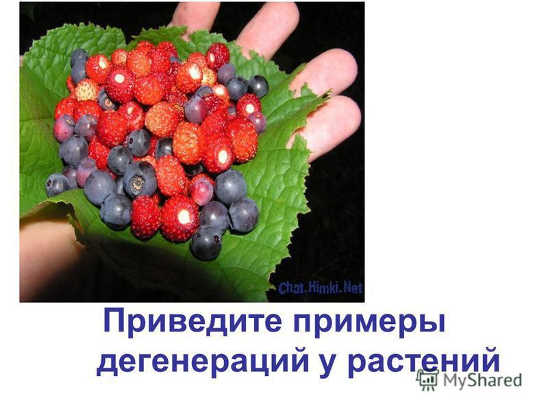 Приведите примеры дегенераций у растений