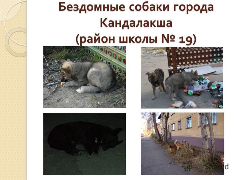 Бездомные собаки города Кандалакша ( район школы 19)