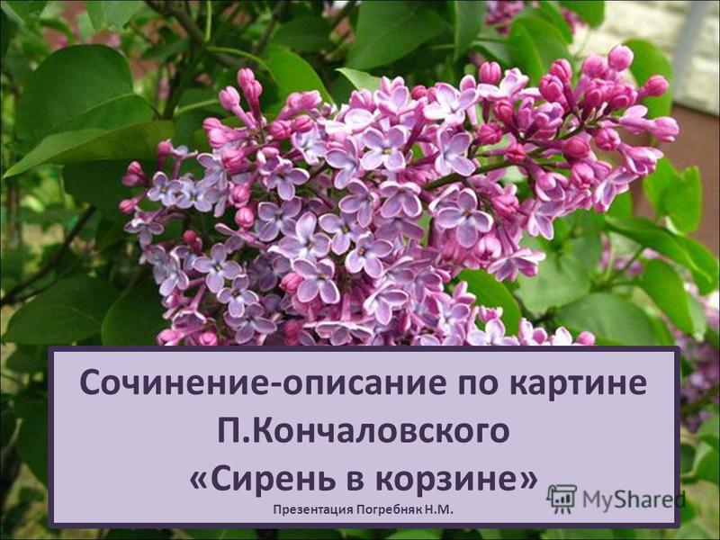 Сочинение-описание по картине П.Кончаловского «Сирень в корзине» Презентация Погребняк Н.М.