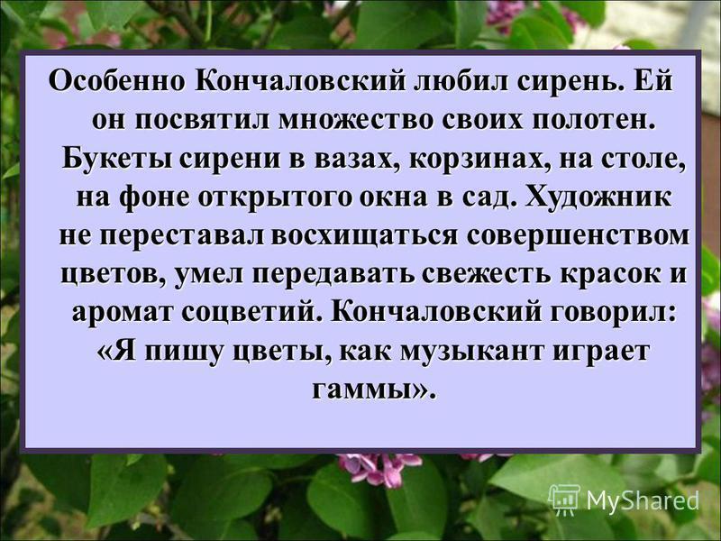 Особенно Кончаловский любил сирень. Ей он посвятил множество своих полотен. Букеты сирени в вазах, корзинах, на столе, на фоне открытого окна в сад. Художник не переставал восхищаться совершенством цветов, умел передавать свежесть красок и аромат соц