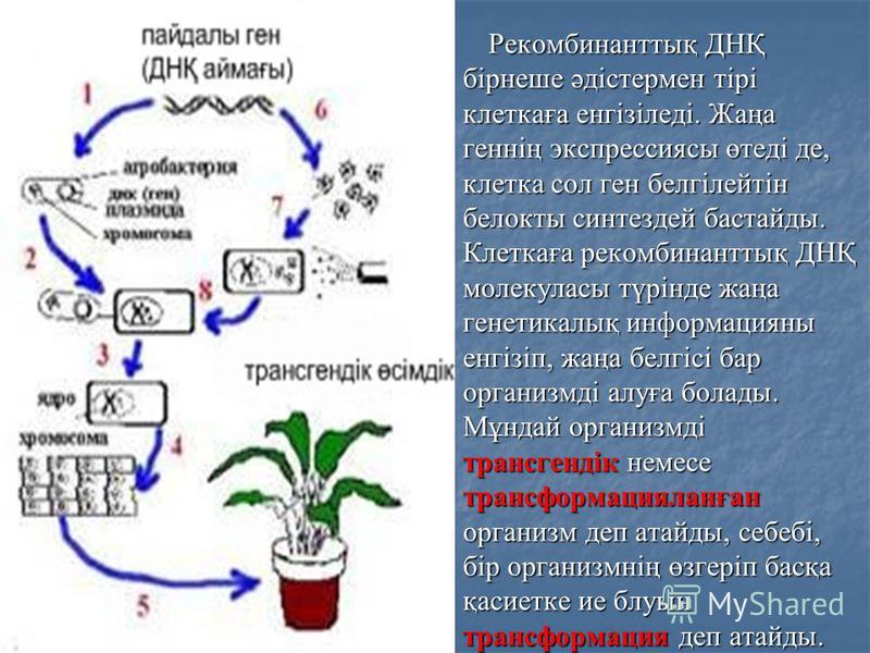 Рекомбинанттық ДНҚ бірнеше әдістермен тірі клеткаға енгізіледі. Жаңа геннің экспрессиясы өтеді де, клетка сол ген белгілейтін белокты синтездей бастайды. Клеткаға рекомбинанттық ДНҚ молекуласы түрінде жаңа генетикалық информацияны енгізіп, жаңа белгі