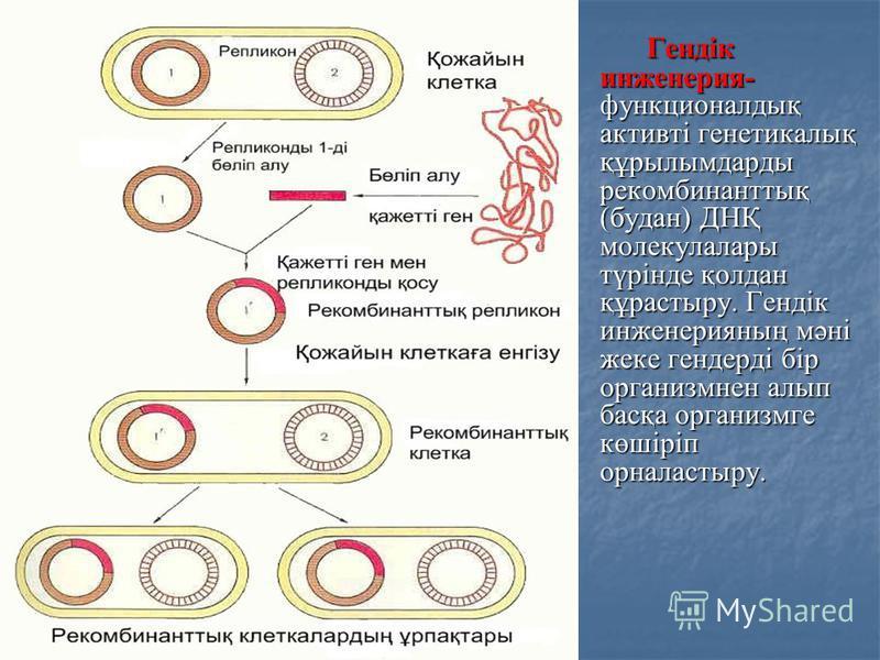 Гендік инженерия- функционалдық активті генетикалық құрылымдарды рекомбинанттық (будан) ДНҚ молекулалары түрінде қолдан құрастыру. Гендік инженерияның мәні жеке гендерді бір организмнен алып басқа организмге көшіріп орналастыру. Гендік инженерия- фун