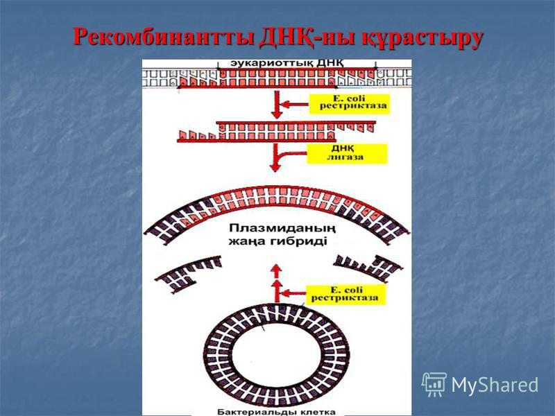 Рекомбинантты ДНҚ-ны құрастыру