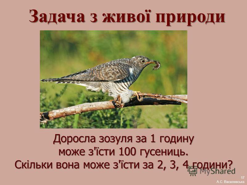 Доросла зозуля за 1 годину може з'їсти 100 гусениць. Скільки вона може з'їсти за 2, 3, 4 години? Задача з живої природи 17 А.С. Василевська