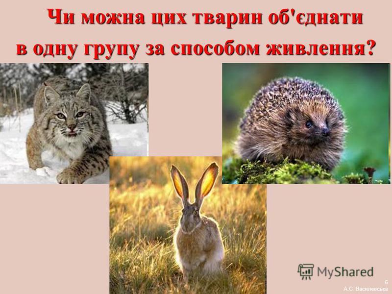 Чи можна цих тварин об'єднати Чи можна цих тварин об'єднати в одну групу за способом живлення? 6 А.С. Василевська