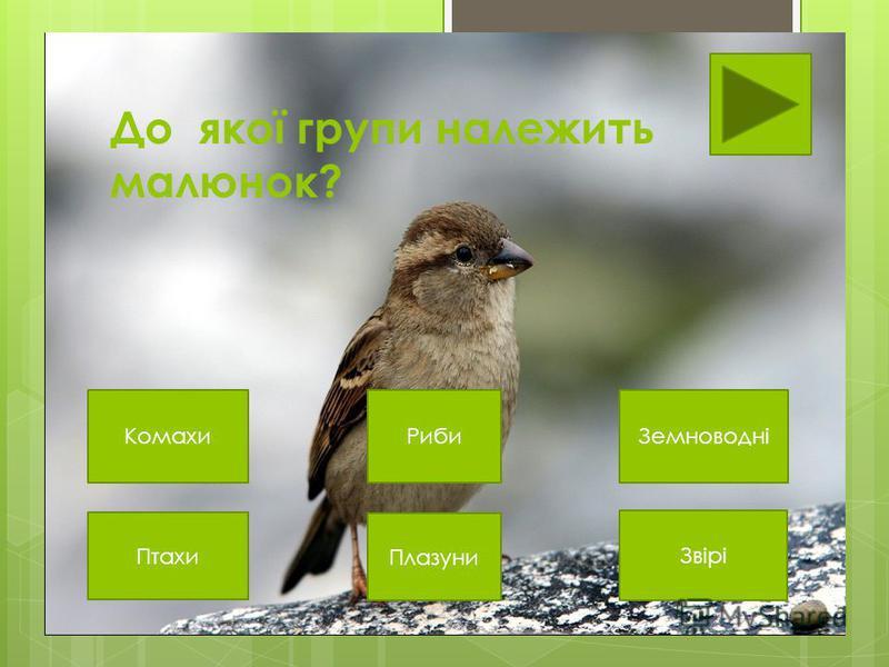 До якої групи належить малюнок? Птахи Плазуни Звірі ЗемноводніРибиКомахи