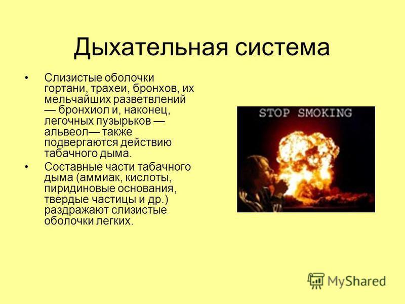 Дыхательная система Слизистые оболочки гортани, трахеи, бронхов, их мельчайших разветвлений бронхиол и, наконец, легочных пузырьков альвеол также подвергаются действию табачного дыма. Составные части табачного дыма (аммиак, кислоты, пиридиновые основ