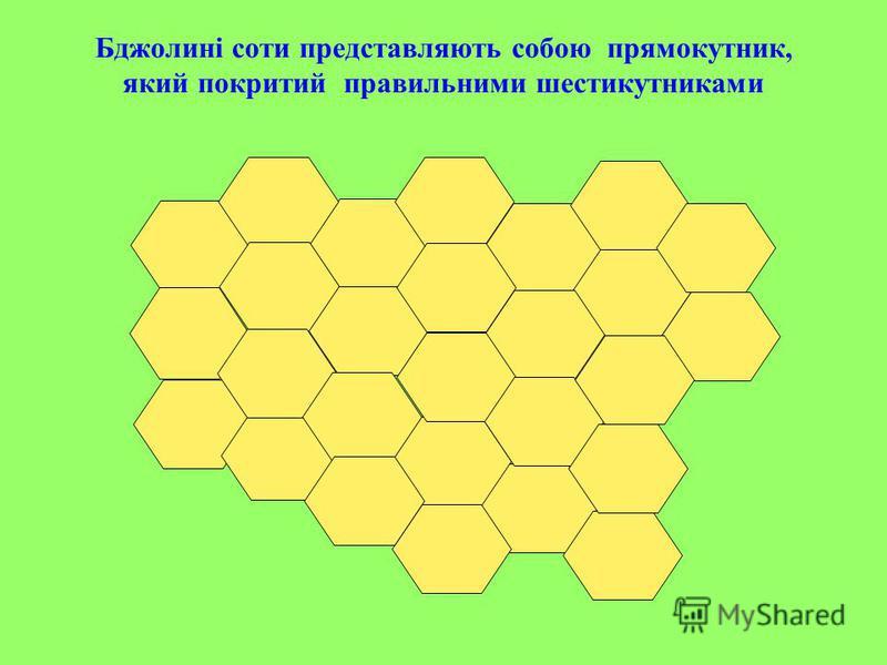 Бджолині соти представляють собою прямокутник, який покритий правильними шестикутниками