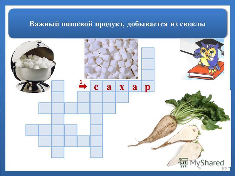 Важный пищевой продукт, добывается из свеклы расах 1