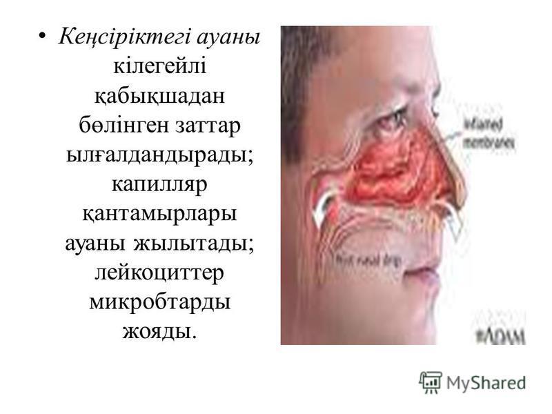 Кеңсіріктегі ауаны кілегейлі қабықшадан бөлінген заттар ылғалдандырады; капилляр қантамырлары ауаны жылытады; лейкоциттер микробтарды жояды.