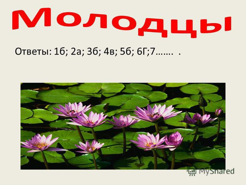 Ответы: 1 б; 2 а; 3 б; 4 в; 5 б; 6Г;7……..