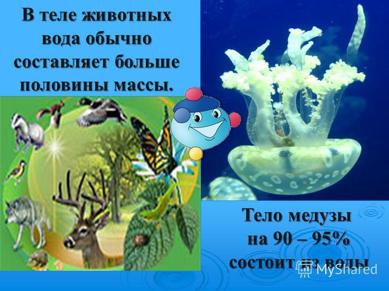 В теле животных вода обычно составляет больше половины массы. Тело медузы на 90 – 95% на 90 – 95% состоит из воды состоит из воды