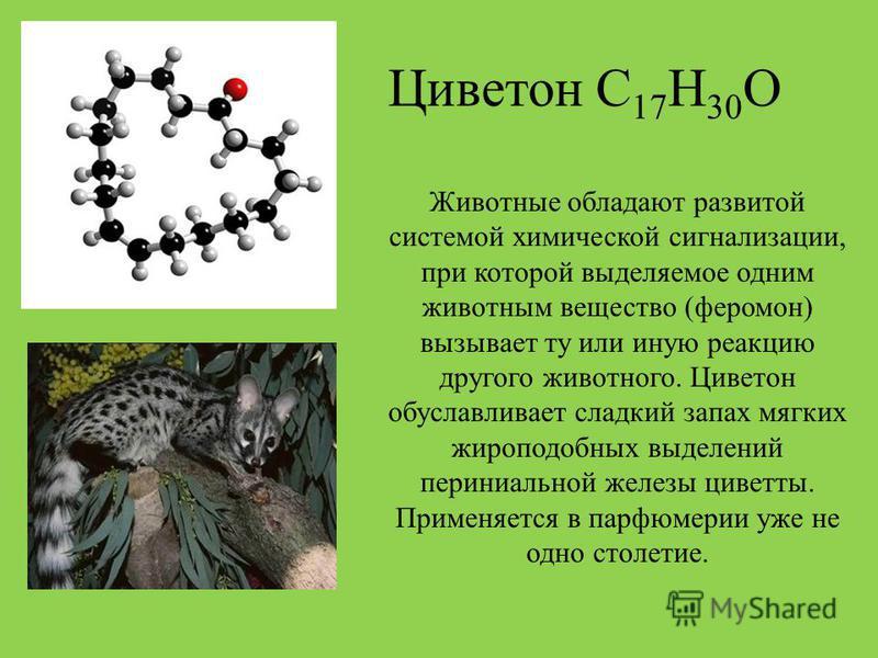 Циветон С 17 Н 30 О Животные обладают развитой системой химической сигнализации, при которой выделяемое одним животным вещество (феромон) вызывает ту или иную реакцию другого животного. Циветон обуславливает сладкий запах мягких жироподобных выделени