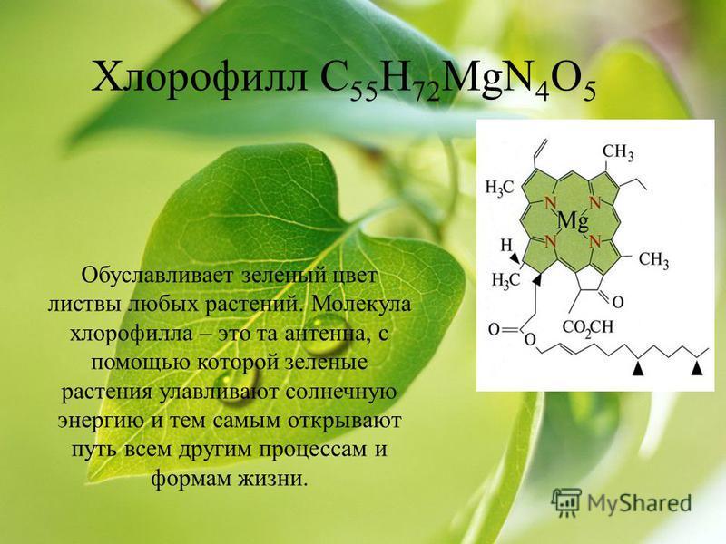 Хлорофилл С 55 Н 72 MgN 4 O 5 Обуславливает зеленый цвет листвы любых растений. Молекула хлорофилла – это та антенна, с помощью которой зеленые растения улавливают солнечную энергию и тем самым открывают путь всем другим процессам и формам жизни.