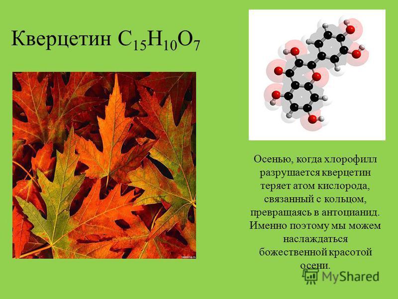 Кверцетин С 15 Н 10 О 7 Осенью, когда хлорофилл разрушается кверцетин теряет атом кислорода, связанный с кольцом, превращаясь в антоцианин. Именно поэтому мы можем наслаждаться божественной красотой осени.