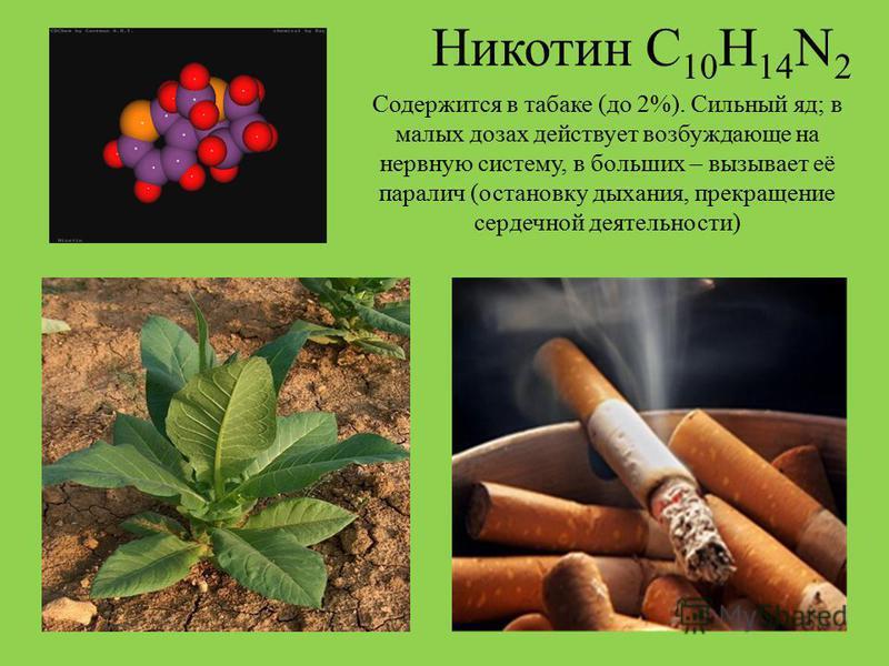 Никотин С 10 Н 14 N 2 Содержится в табаке (до 2%). Сильный яд; в малых дозах действует возбуждающе на нервную систему, в больших – вызывает её паралич (остановку дыхания, прекращение сердечной деятельности)