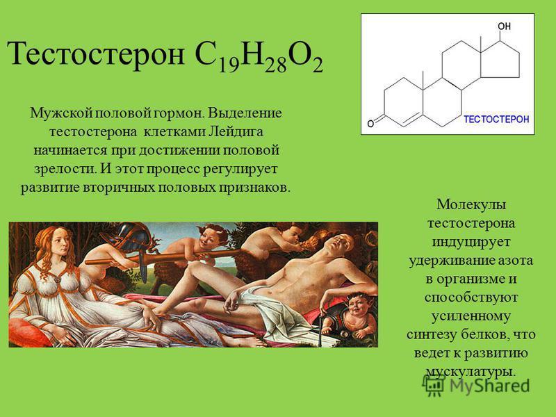 Тестостерон С 19 Н 28 О 2 Мужской половой гормон. Выделение тестостерона клетками Лейдига начинается при достижении половой зрелости. И этот процесс регулирует развитие вторичных половых признаков. Молекулы тестостерона индуцирует удерживание азота в
