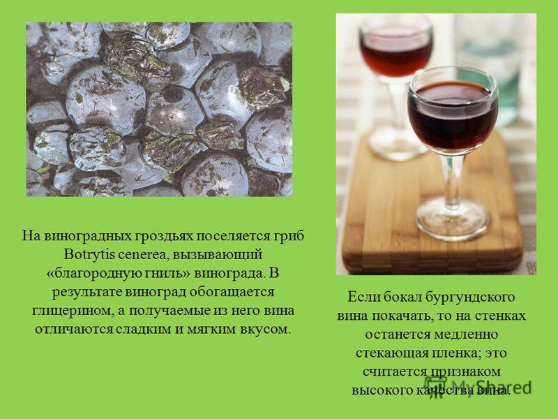 На виноградных гроздьях поселяется гриб Botrytis cenerea, вызывающий «благородную гниль» винограда. В результате виноград обогащается глицерином, а получаемые из него вина отличаются сладким и мягким вкусом. Если бокал бургундского вина покачать, то