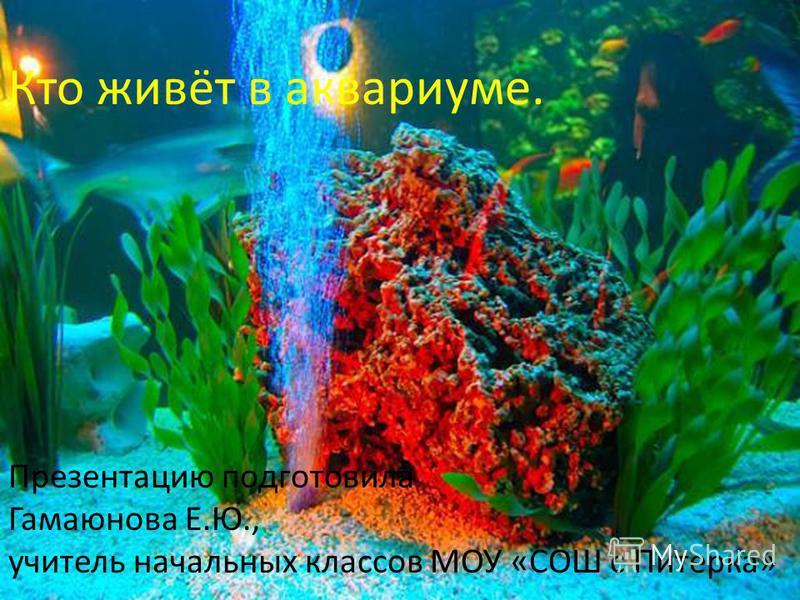 Кто живёт в аквариуме. Презентацию подготовила Гамаюнова Е.Ю., учитель начальных классов МОУ «СОШ с Питерка»
