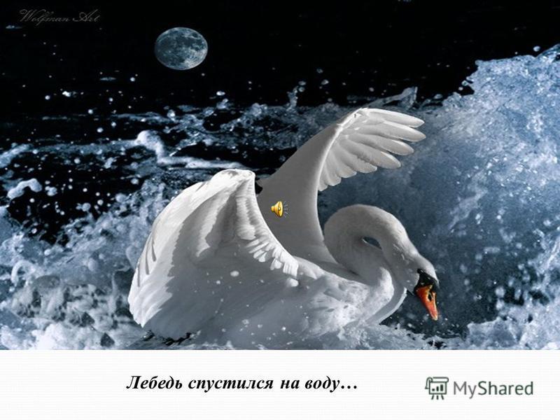 Лебедь спустился на воду…