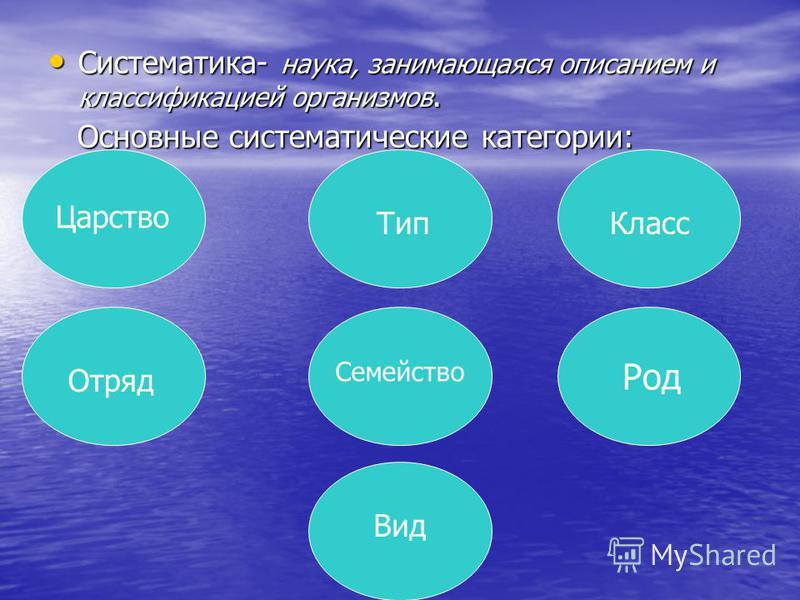 Систематика- наука, занимающаяся описанием и классификацией организмов. Систематика- наука, занимающаяся описанием и классификацией организмов. Основные систематические категории: Основные систематические категории: Царство Вид Тип Класс Отряд Семейс
