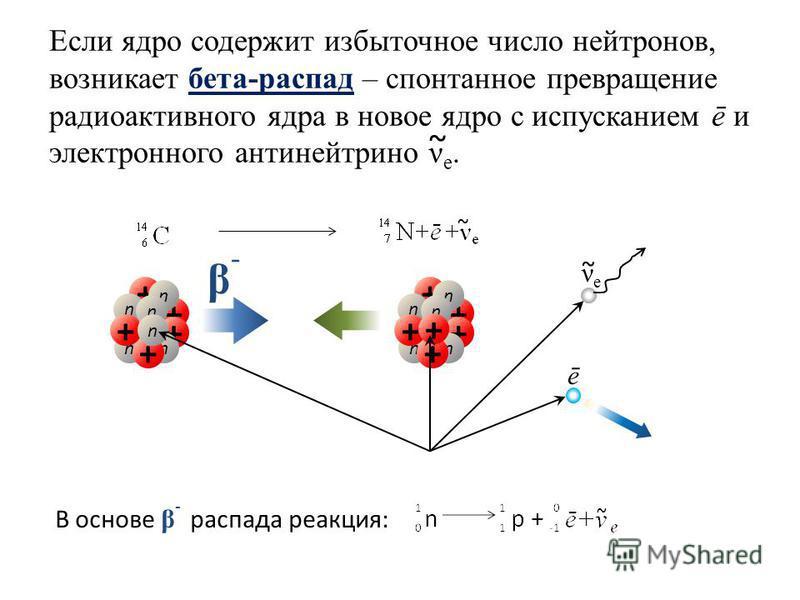 Если ядро содержит избыточное число нейтронов, возникает бета-распад – спонтанное превращение радиоактивного ядра в новое ядро с испусканием ē и электронного антинейтрино ν e. ~ + + + n n n n + n + n + + + n n n n + n + + νeνe ~ ē ~ β-β- В основе β -