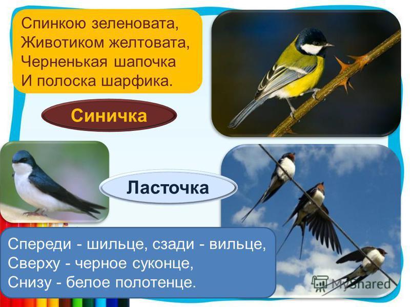 Спинкою зеленовата, Животиком желтовата, Черненькая шапочка И полоска шарфика. Синичка Спереди - шильце, сзади - вильце, Сверху - черное суконце, Снизу - белое полотенце. Ласточка
