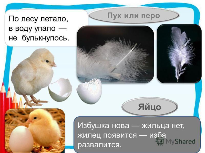 По лесу летало, в воду упало не булькнулось. Пух или перо Избушка нова жильца нет, жилец появится изба развалится. Яйцо