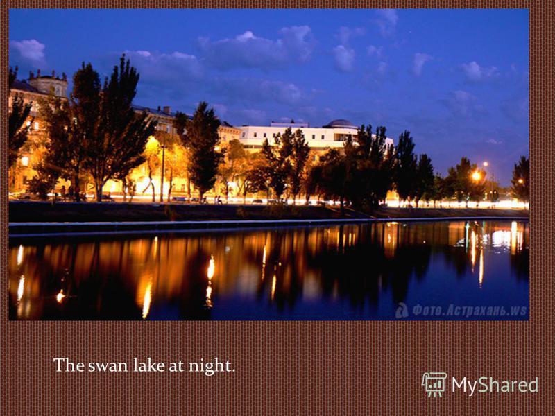 The swan lake at night.