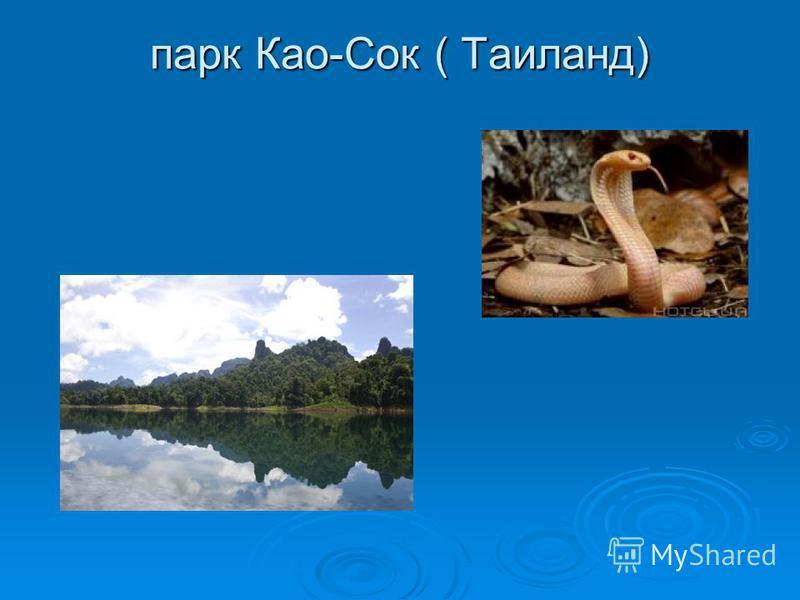 парк Као-Сок ( Таиланд)