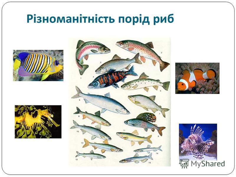 Різноманітність порід риб