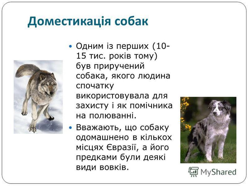 Одним із перших (10- 15 тис. років тому) був приручений собака, якого людина спочатку використовувала для захисту і як помічника на полюванні. Вважають, що собаку одомашнено в кількох місцях Євразії, а його предками були деякі види вовків. Доместикац