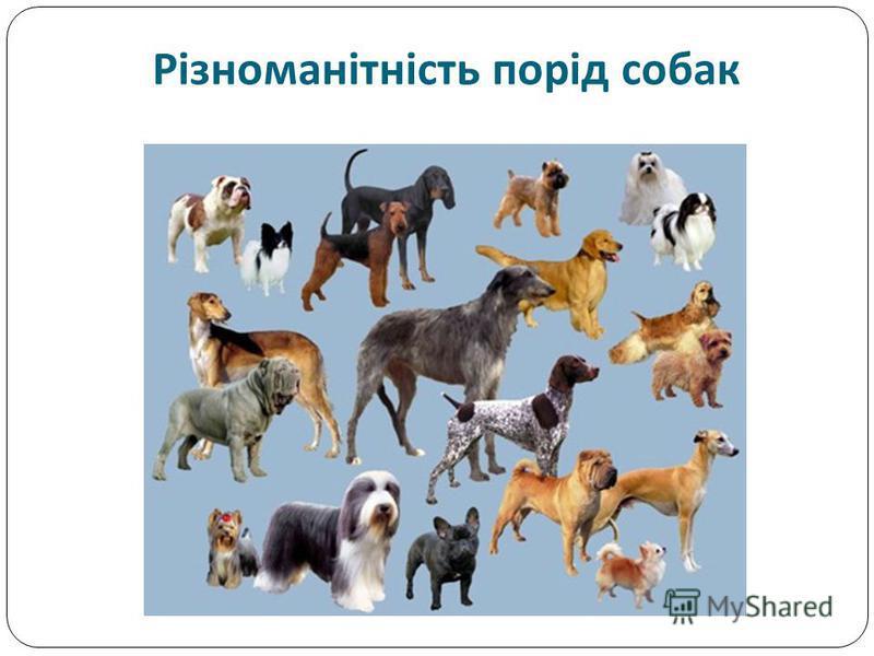 Різноманітність порід собак