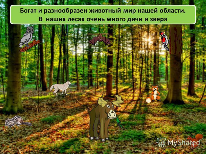Богат и разнообразен животный мир нашей области. В наших лесах очень много дичи и зверя