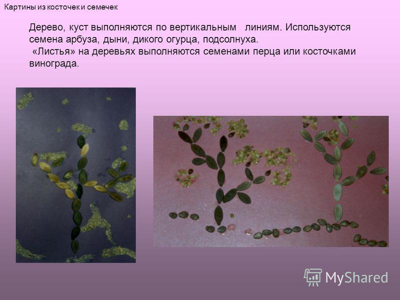 Дерево, куст выполняются по вертикальным линиям. Используются семена арбуза, дыни, дикого огурца, подсолнуха. «Листья» на деревьях выполняются семенами перца или косточками винограда. Картины из косточек и семечек