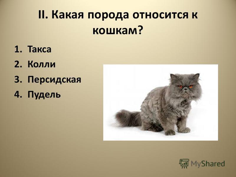 II. Какая порода относится к кошкам? 1. Такса 2. Колли 3. Персидская 4.Пудель