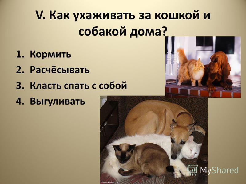 V. Как ухаживать за кошкой и собакой дома? 1. Кормить 2.Расчёсывать 3. Класть спать с собой 4.Выгуливать