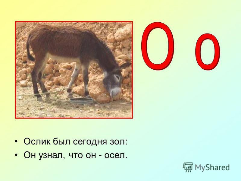 Носорог бодает рогом - Не шутите с носорогом.