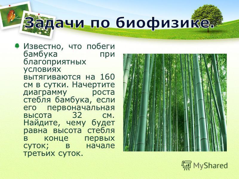 Известно, что побеги бамбука при благоприятных условиях вытягиваются на 160 см в сутки. Начертите диаграмму роста стебля бамбука, если его первоначальная высота 32 см. Найдите, чему будет равна высота стебля в конце первых суток; в начале третьих сут