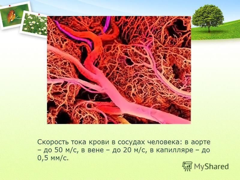 Скорость тока крови в сосудах человека: в аорте – до 50 м/с, в вене – до 20 м/с, в капилляре – до 0,5 мм/с.