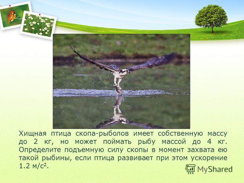 Хищная птица скопа-рыболов имеет собственную массу до 2 кг, но может поймать рыбу массой до 4 кг. Определите подъемную силу скопы в момент захвата ею такой рыбины, если птица развивает при этом ускорение 1.2 м/с 2.