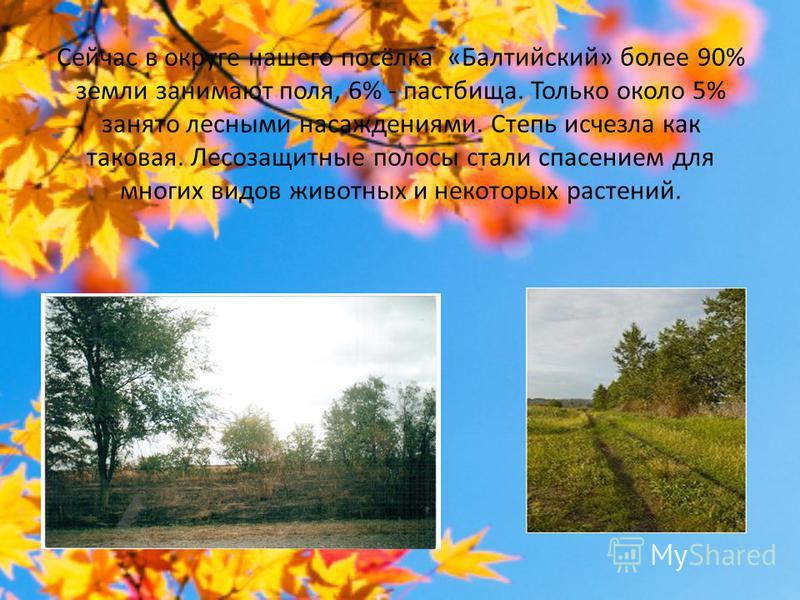 Сейчас в округе нашего посёлка «Балтийский» более 90% земли занимают поля, 6% - пастбища. Только около 5% занято лесными насаждениями. Степь исчезла как таковая. Лесозащитные полосы стали спасением для многих видов животных и некоторых растений.