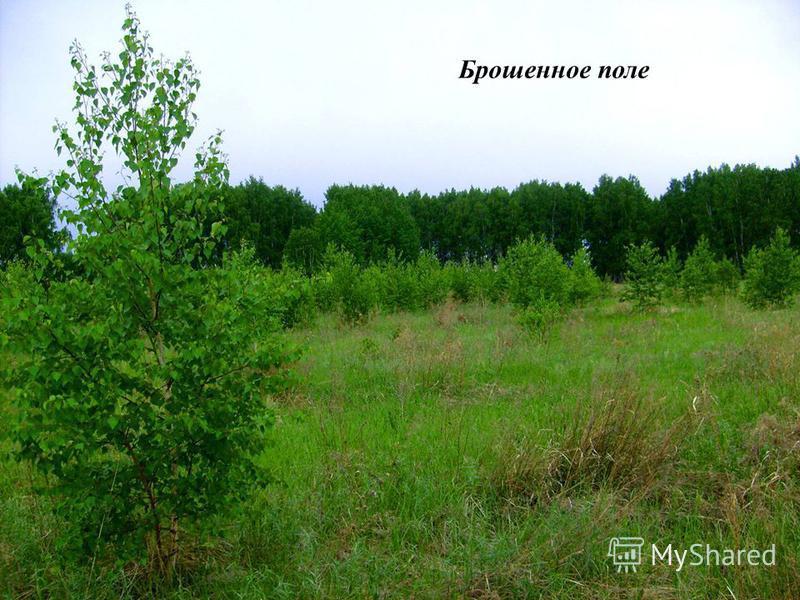 Брошенное поле